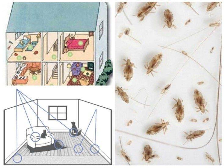 (+23 фото) Как избавиться от блох в квартире