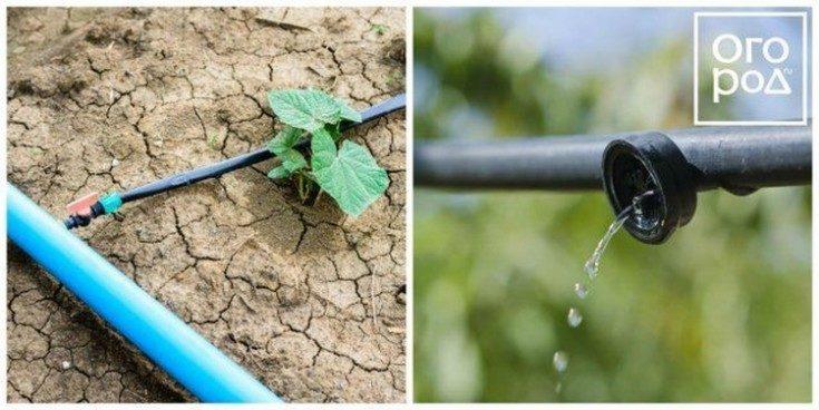 Капельный полив своими руками для дачи