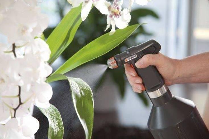 Как бороться с тлей на орхидеях в домашних условиях