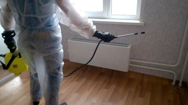 (+40 фото) Как избавиться от сеноедов в квартире