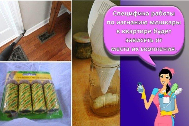 (+35 фото) Как избавиться от мошек дома