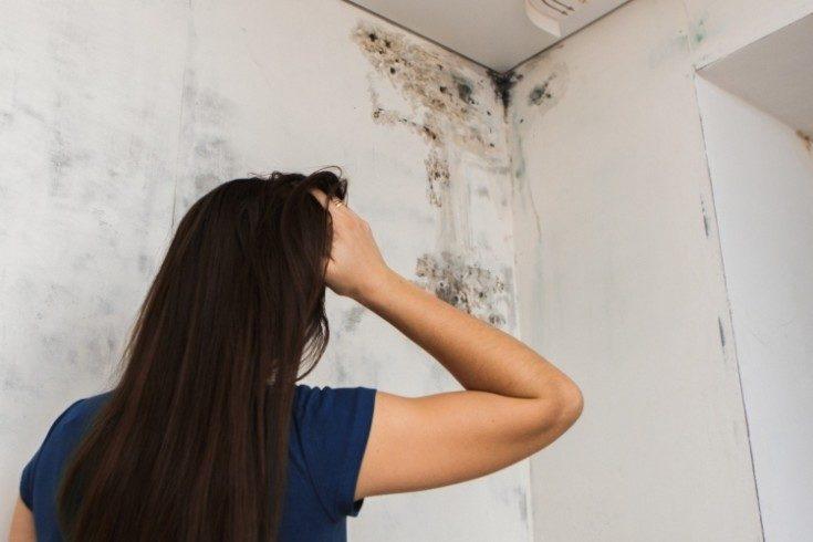 (+32 фото) Как убрать плесень со стены в квартире