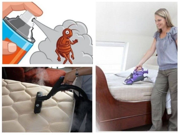 (+45 фото) Как избавиться от клопов в квартире