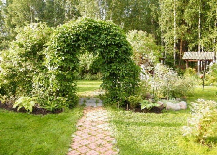 Пергола для вьющихся растений