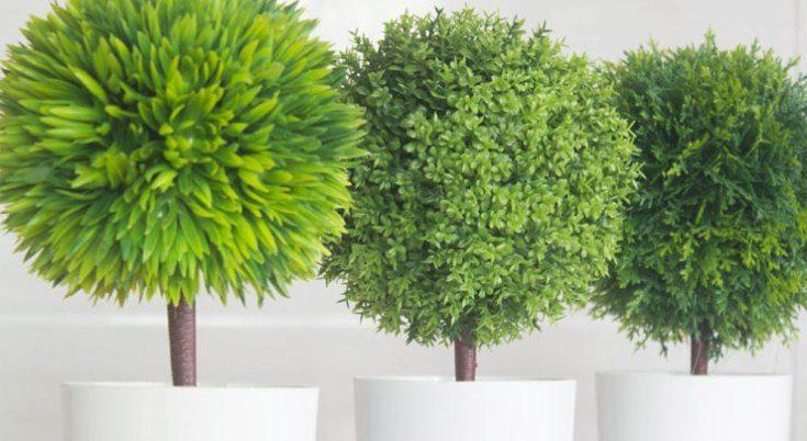 (+50 фото) Искусственные деревья для интерьера