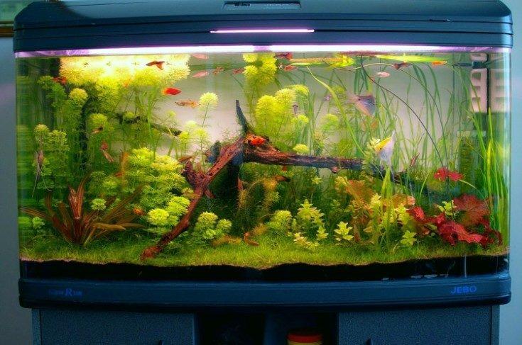 Оформление аквариума в современном интерьере