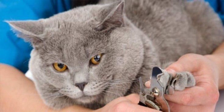 (+36 фото) Как отучить кошку драть мебель действенные методы