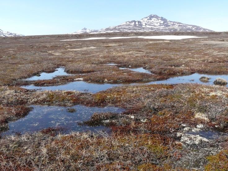 Тундрово-глеевые почвы