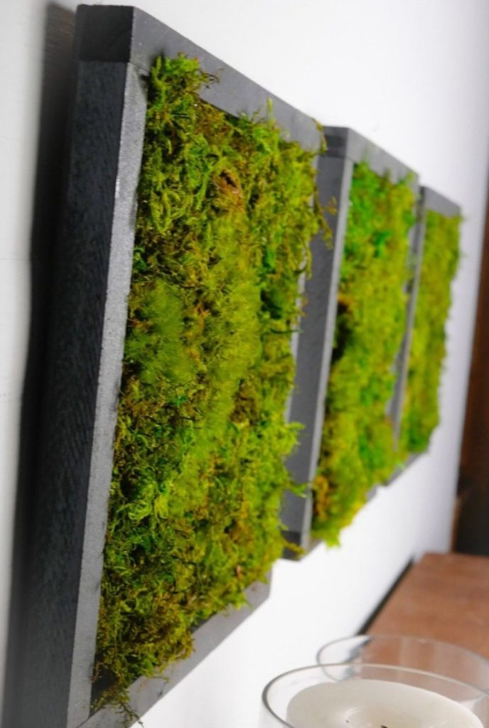 (+50 фото) Cтабилизированный мох в интерьере