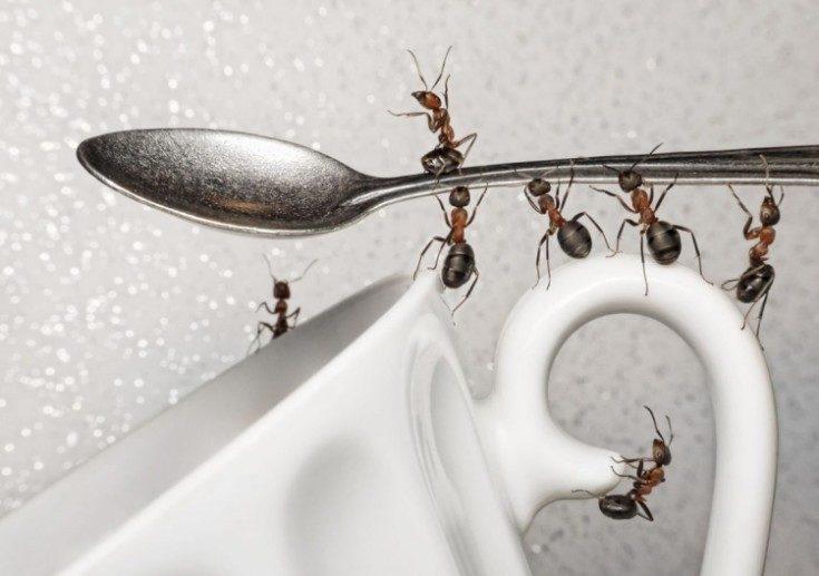 (+21 фото) Как избавиться от домашних муравьёв в квартире народными и покупными средствами