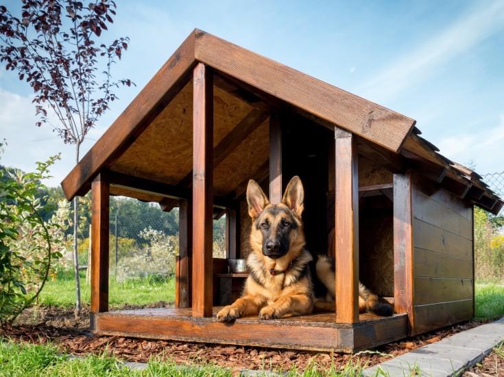 Будка для собаки своими руками пошаговые инструкции: размеры и утепление, этапы работ, интересные идеи